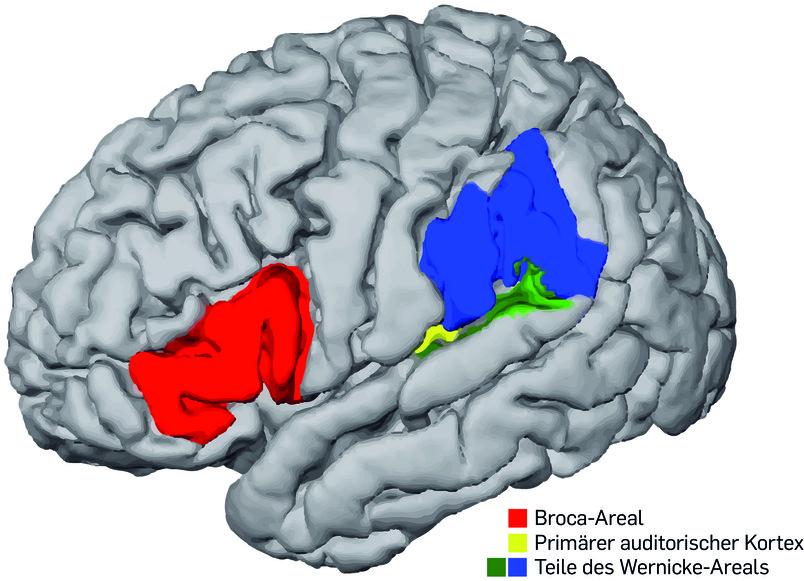 Wenn verschiedene Gehirne sprechen - Newsportal - Ruhr-Universität ...