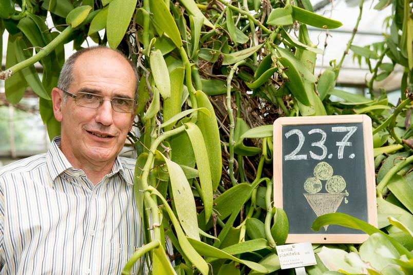 Hätten Sie es gewusst? Vanille wird aus einer Orchidee gewonnen. Die Vanilla planifolia gibt es auch im Botanischen Garten der RUB, wie Thomas Stützel auf unserem Foto beweist.