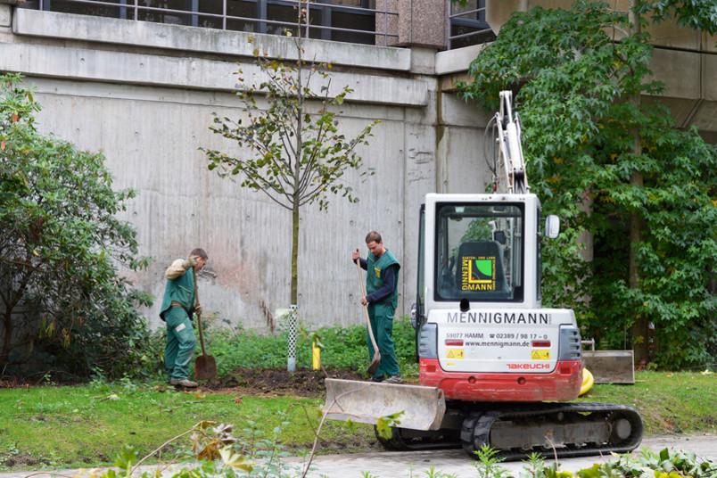 Der erste neue Baum steht, 35 weitere folgen.