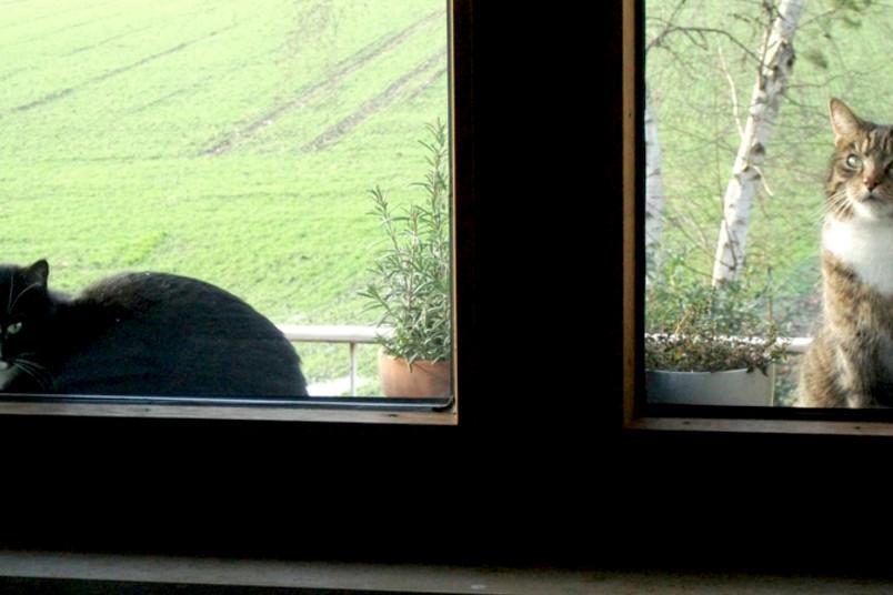 Zwei Katzen liegen auf einem Fenstersims.