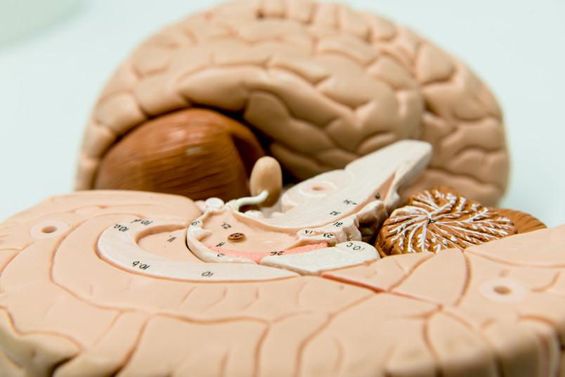 Beim Erinnern reaktiviert das Gehirn Sinnesinformationen, und zwar schneller als bislang gedacht.