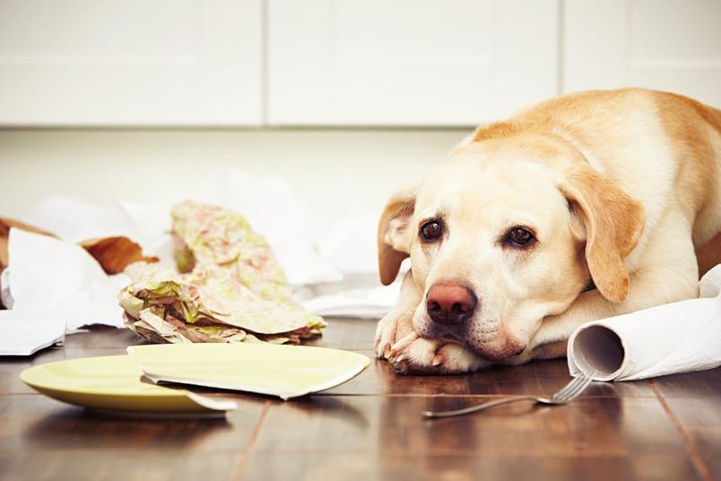 Oft glauben wir zu wissen, was in Tieren vor sich geht. Doch Forscher streiten über ihre kognitiven Fähigkeiten.