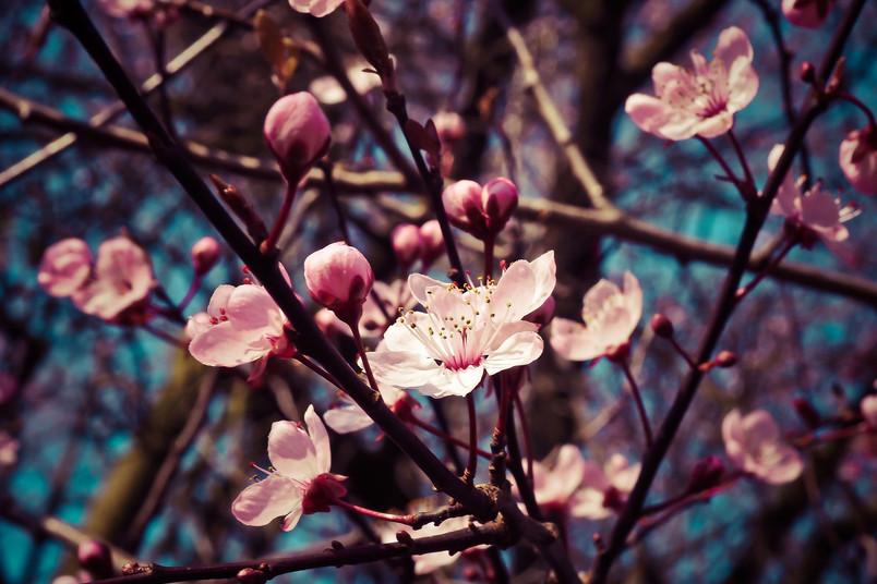 Es blüht und blüht – wie kann man da keine Frühlingsgefühle bekommen?