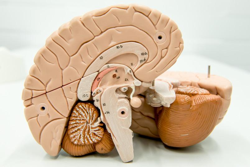 Das Gehirn verarbeitet Erinnerungen anders, je nachdem, wie lange das Geschehene zurückliegt.
