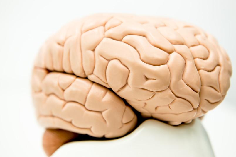 Erst mithilfe des Gehirns entstehen in unserem Kopf gute Bilder.