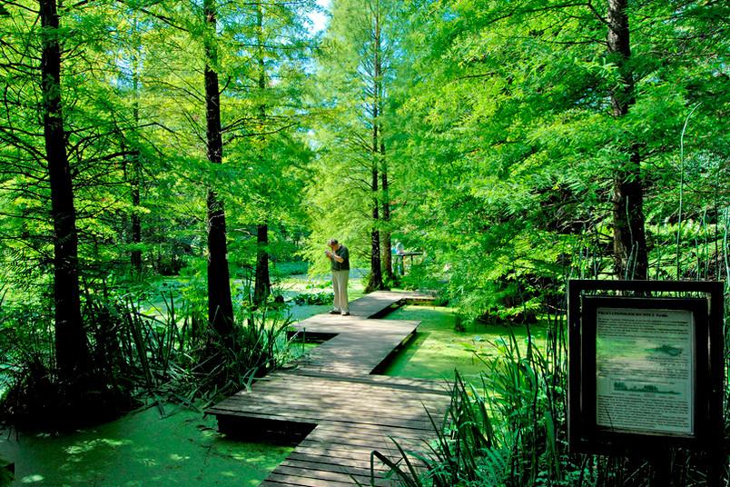 So grün wie bei Shakespeare: Die Frühjahrstagung wird im Botanischen Garten der RUB eröffnet.