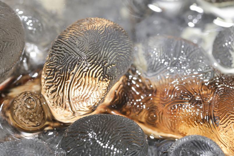Eine filigrane Eisstruktur erinnert an einen Fingerabdruck.