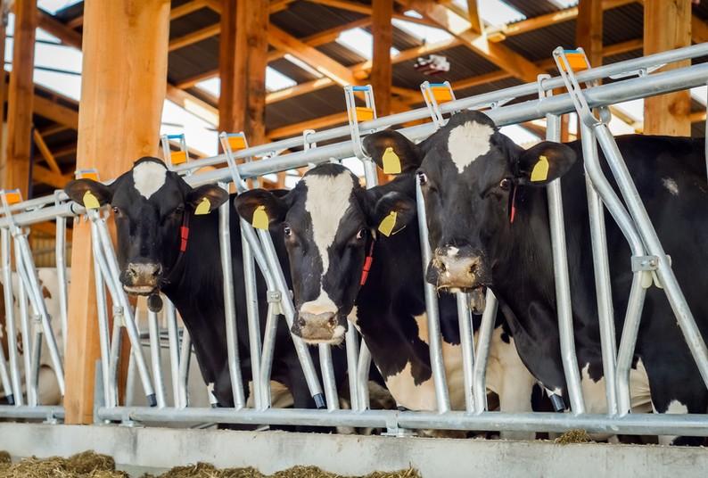 Ein neues Forschungsprojekt soll die Gesundheit und das Wohl von Nutztieren verbessern.
