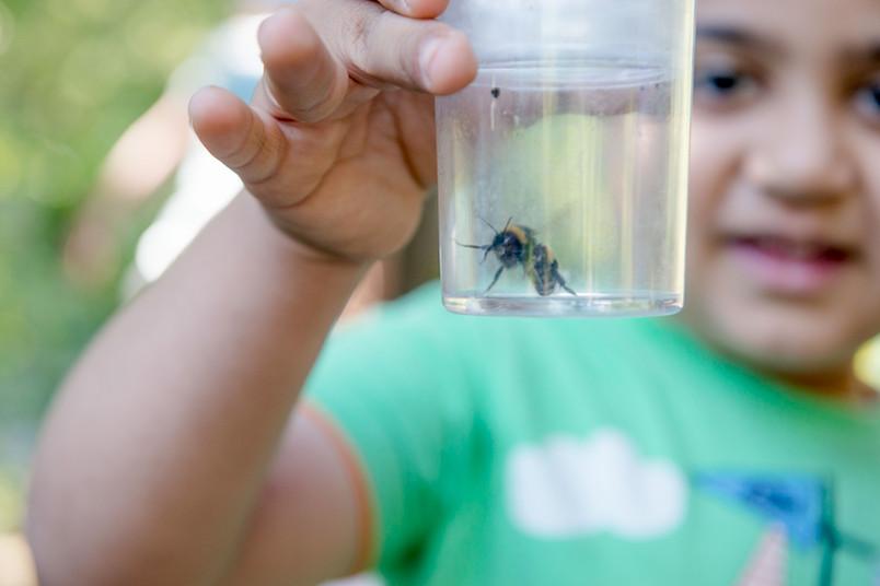Kind hält einen Becher mit einer Biene darin.