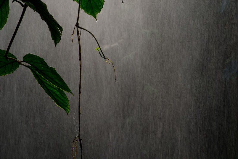 Blätter im Starkregen