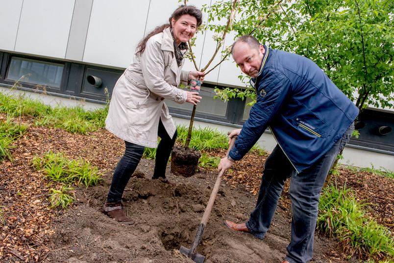 Schulleiterin Michaela Pfeifer und Ausbildungsleiter Frank Rous pflanzen einen Apfelbaum auf dem Campus