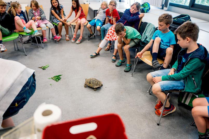 Eine Gruppe von Kindern betrachtet eine Schildkröte