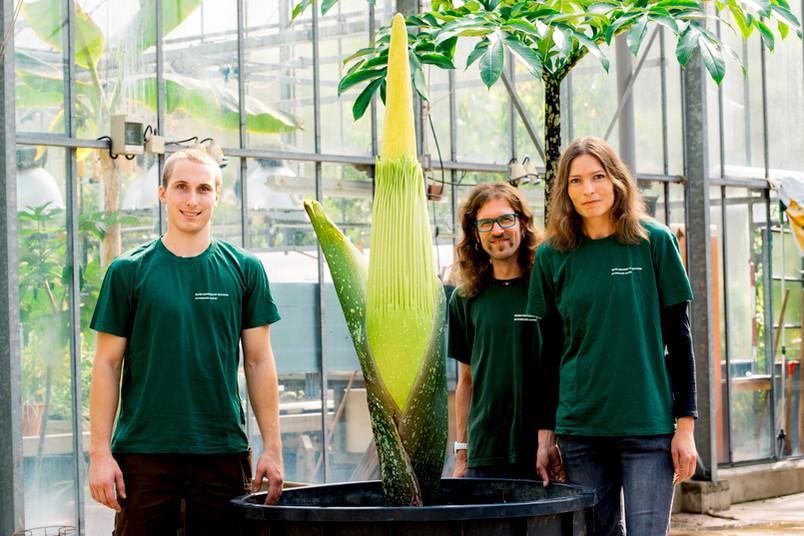 Zwei Gärtner und eine Gärtnerin neben einer großen Pflanzen.