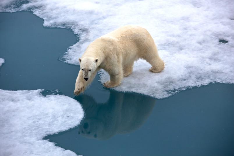 Eisbär auf schmelzendem Eis