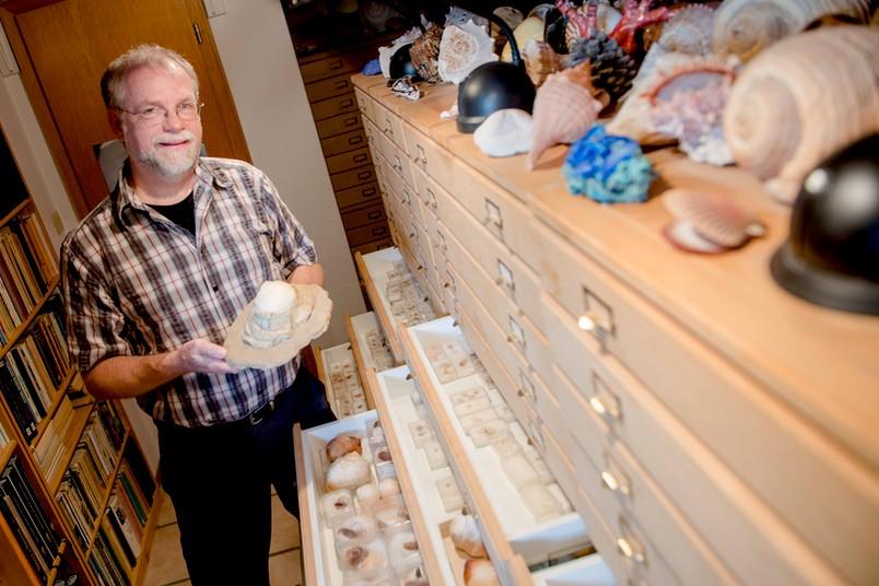 Mann hält Schneckengehäuse in der Hand, neben ihm zahlreiche Schubladen mit Schneckenhäusern.