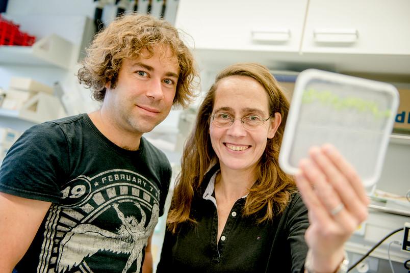 Forscher mit jungen Pflanzen