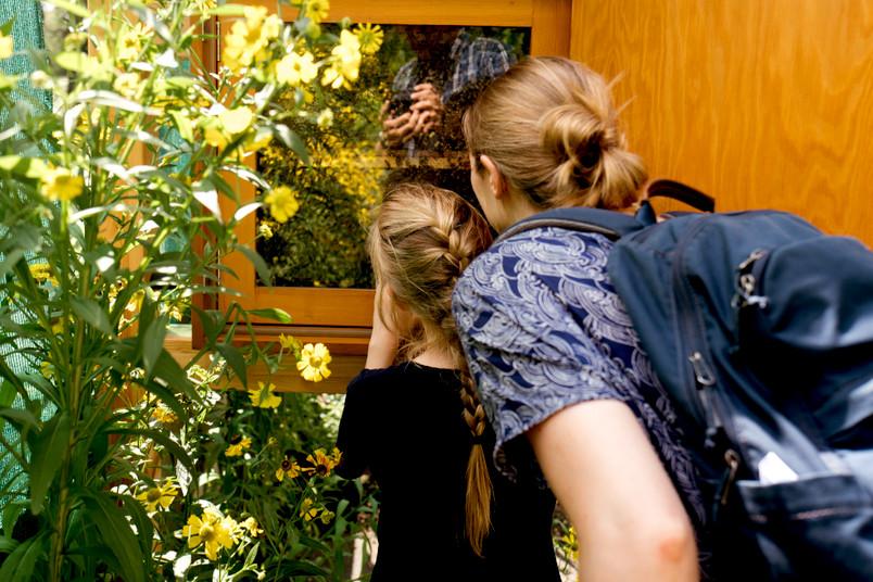 Frau und Kind schauen sich einen Bienenschaukasten an.