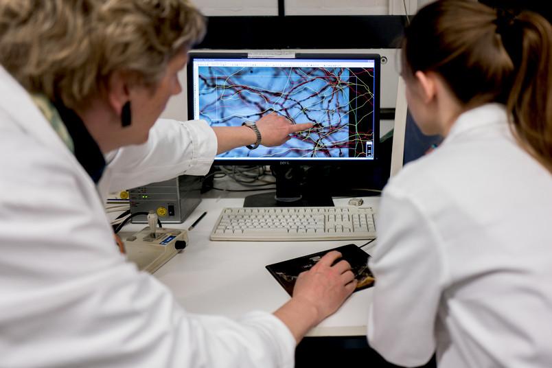 Zwei Forscherinnen begutachten mikroskopische Aufnahmen von Nervenzellen am Computer.