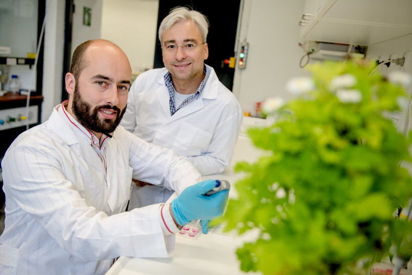 Zwei Forscher mit Mutterkraut im Labor