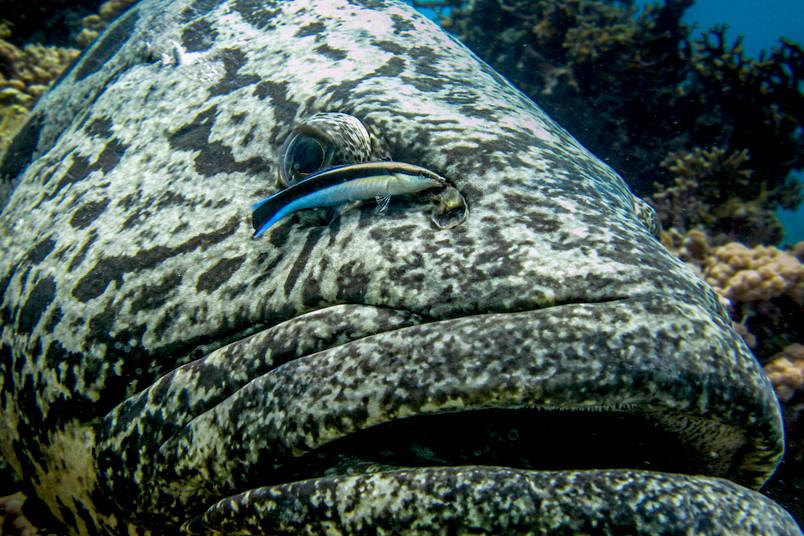 Großer und kleiner Fisch