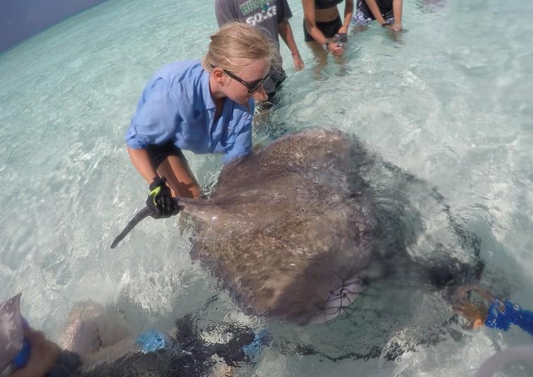 Tanja Schwanck hält einen Rochen im Meer fest.