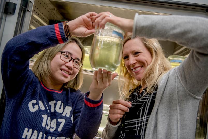 Luxi Chen und Linda Weiss untersuchen Wasserflöhe