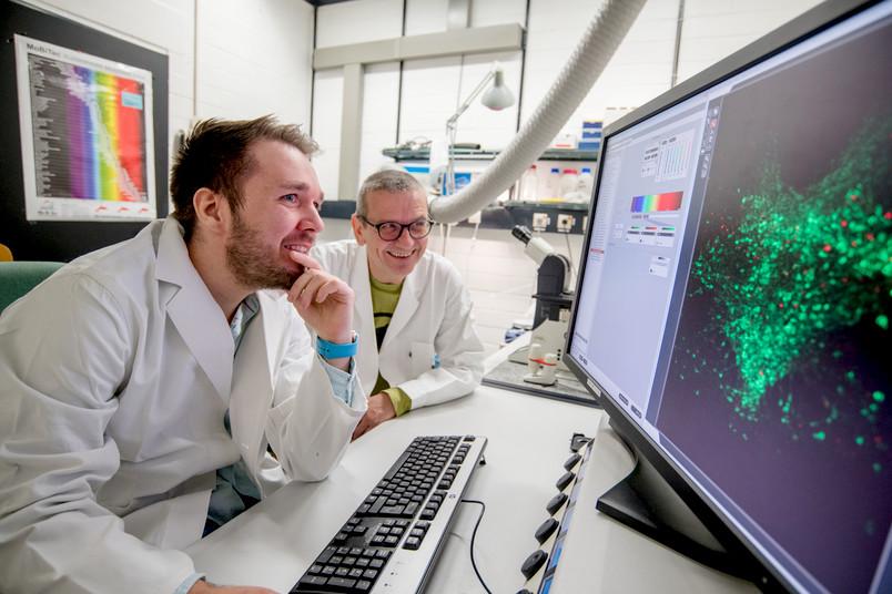 Forscher vor Monitor mit grün leuchtenden Zellen