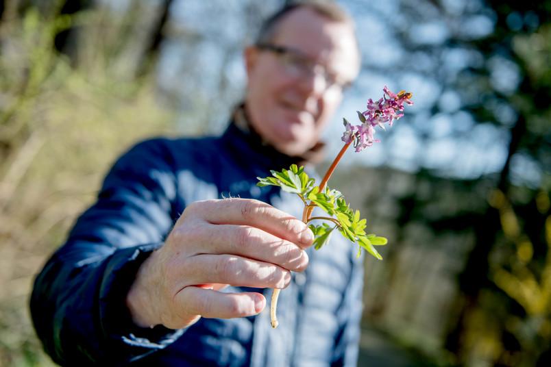 Mann hält lila Pflanze hoch, Lerchensporn