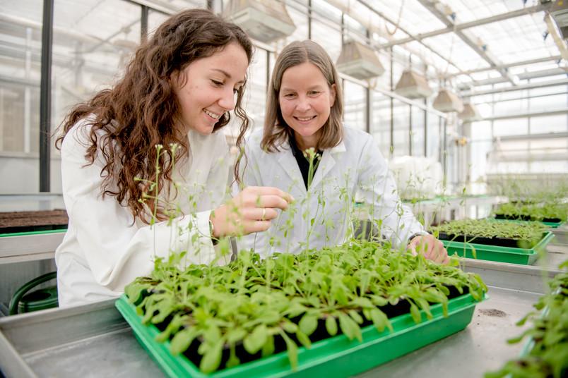 Zwei Forscherinnen betrachten eine Pflanze