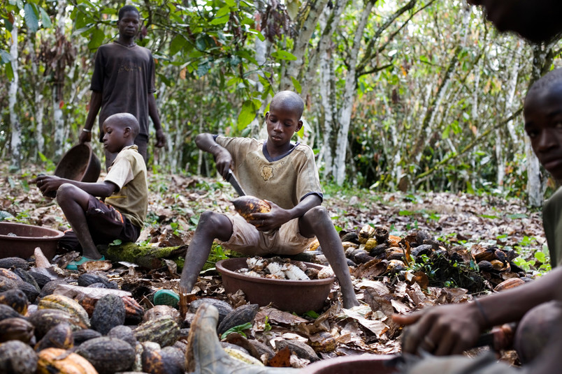Kinderarbeit, hier Kakaoernte in Afrika