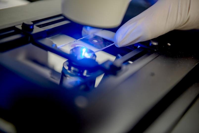 Blau leuchtender Objektträger unter einem Mikroskop