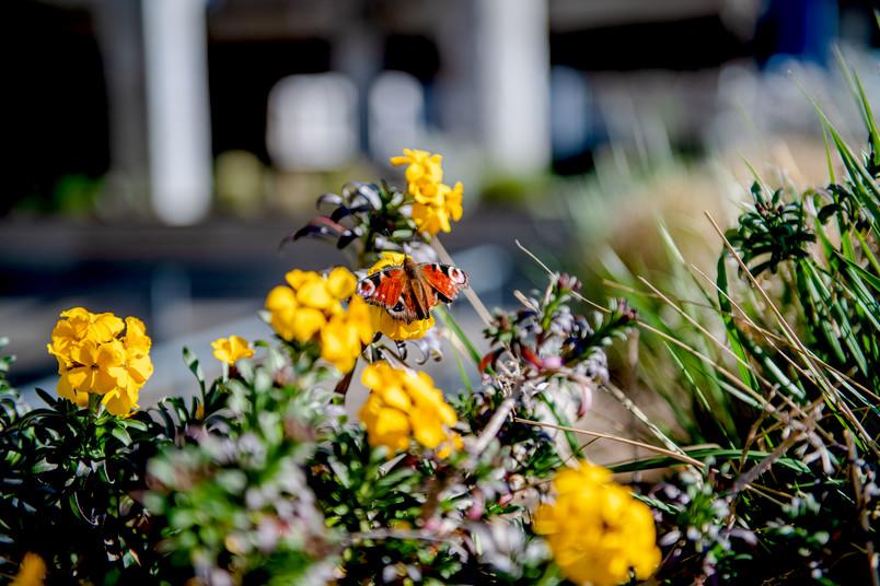 Blumenbeet Campus