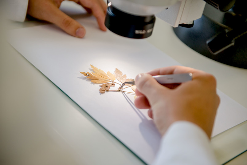 Blatt unter dem Mikroskop