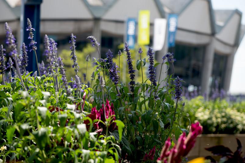 Blumen vor Audimax