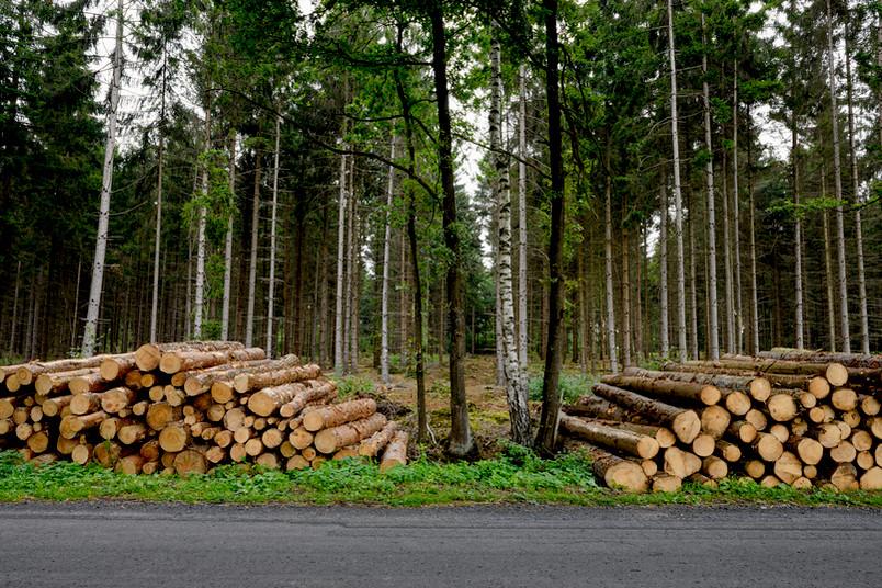 Gefällte Baumstämme im Wald