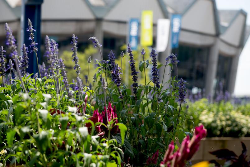 Blumen vor dem Audimax