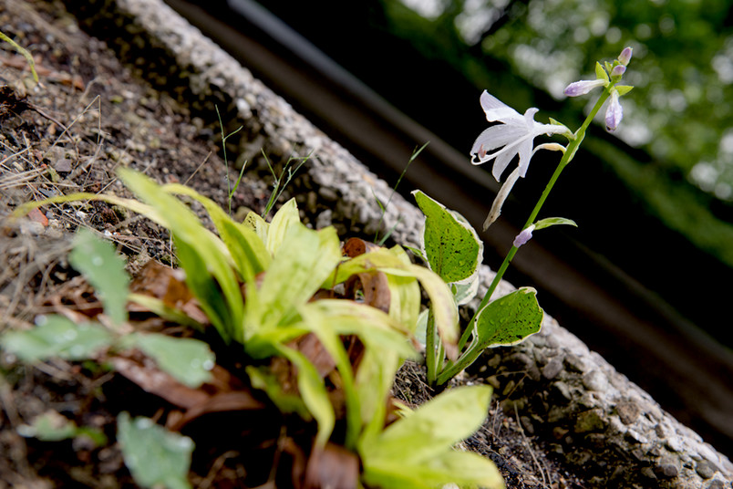 Blume im Regen