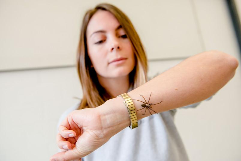 Spinne auf Arm