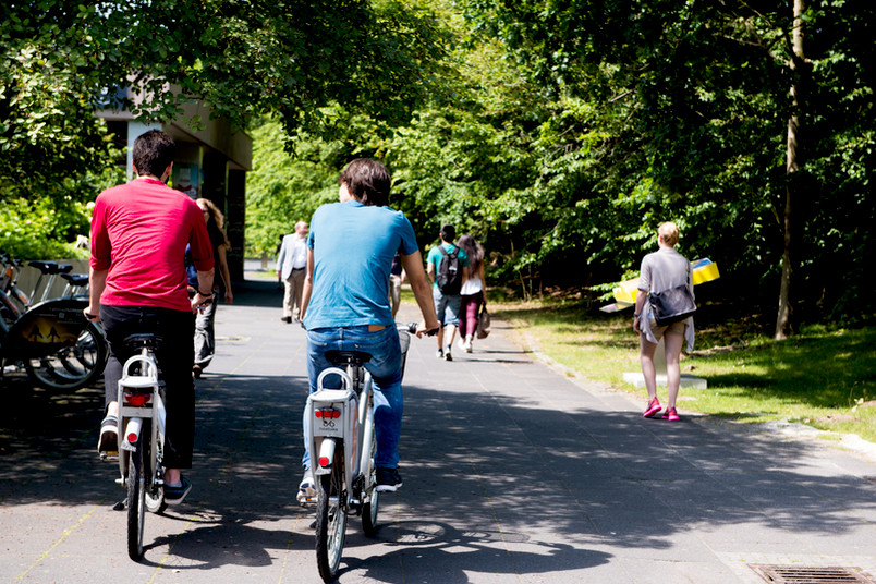 Zwei Männer auf Fahrrädern von hinten