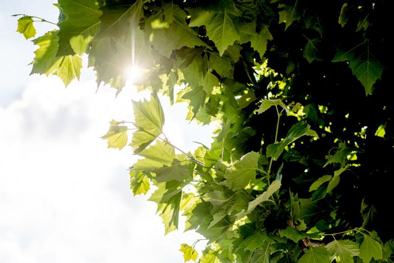 Sonne scheint auf Blätter eines Baumes
