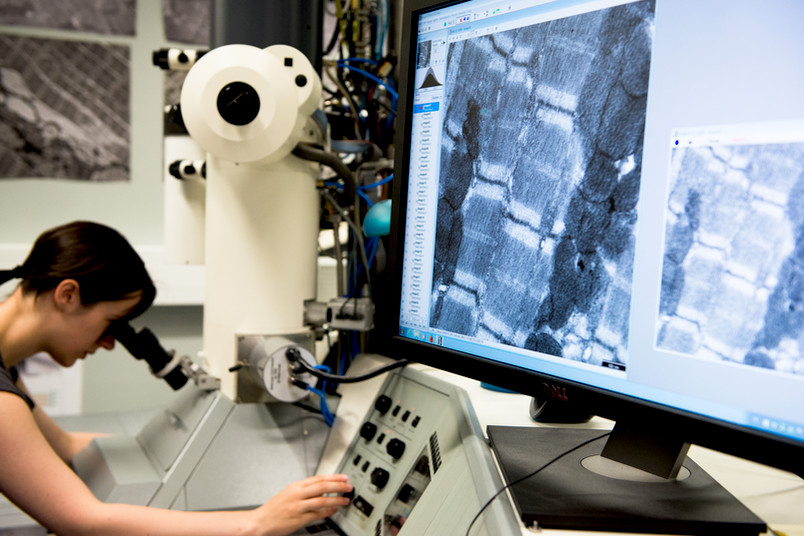 Mit zwei Tenure-Track-Professuren wird die medizinische Forschung mit großen Datenmengen – Big Data – gefördert.