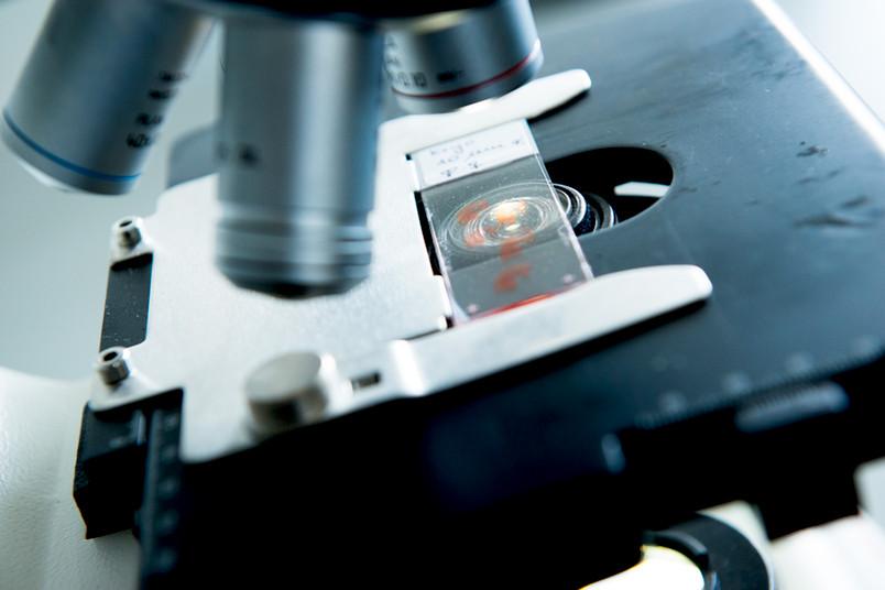 <div> Im Fokus: Einblicke in die aktuellen Forschungsthemen der Genetik gibt es während der internationalen Tagung in Bochum.</div>