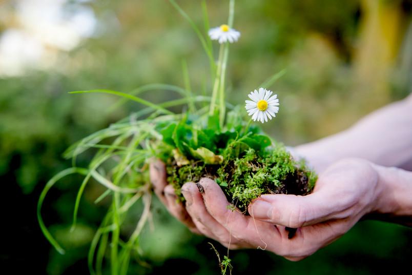 Zwei geöffnete Hände mit Erde und Blumen gefüllt