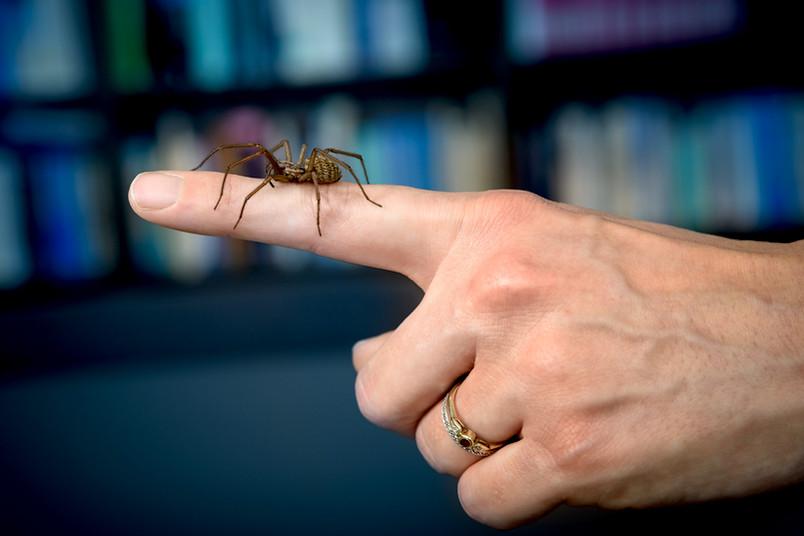 Spinne auf Hand